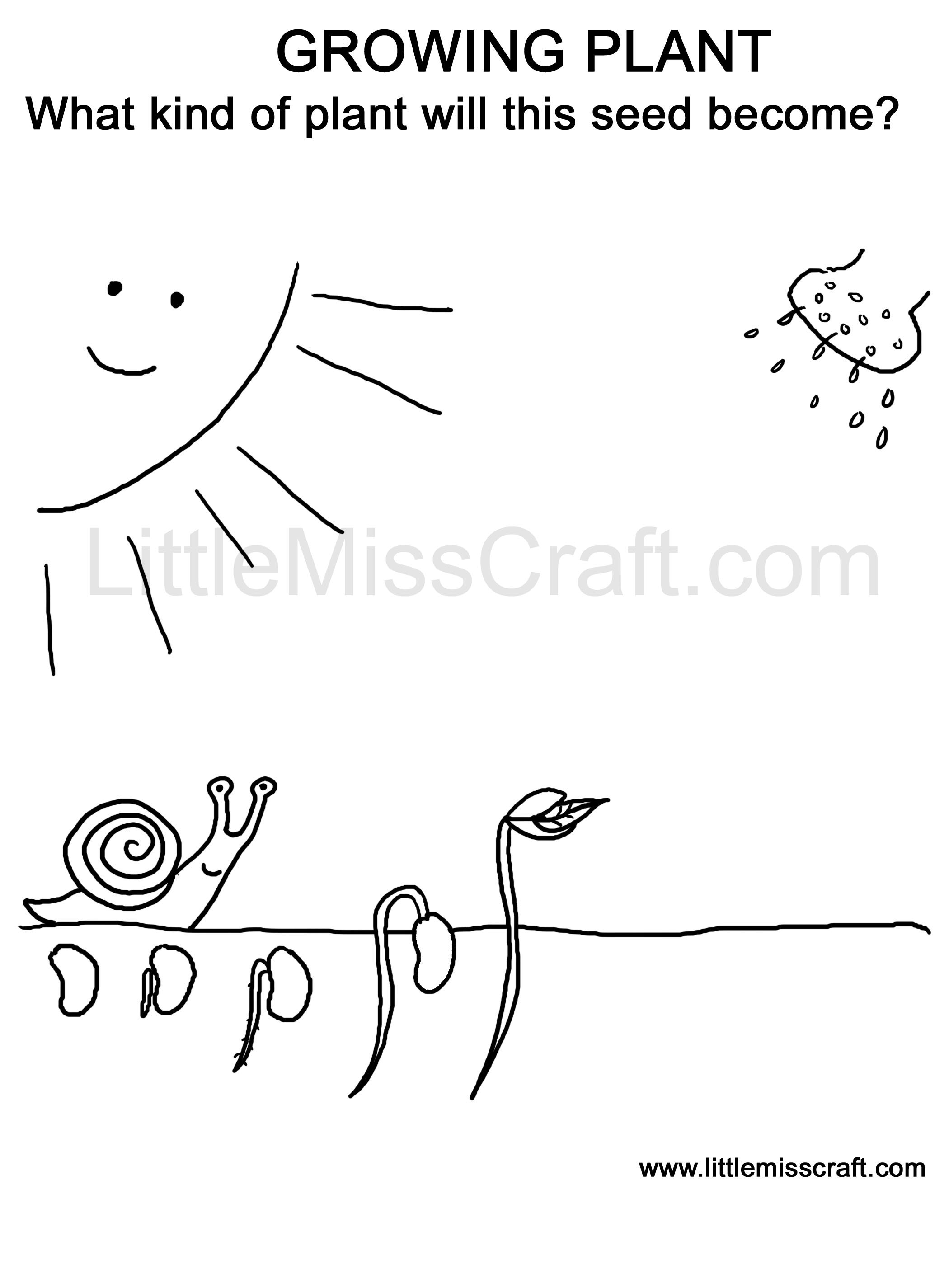 Coloring Pages Seed Growth