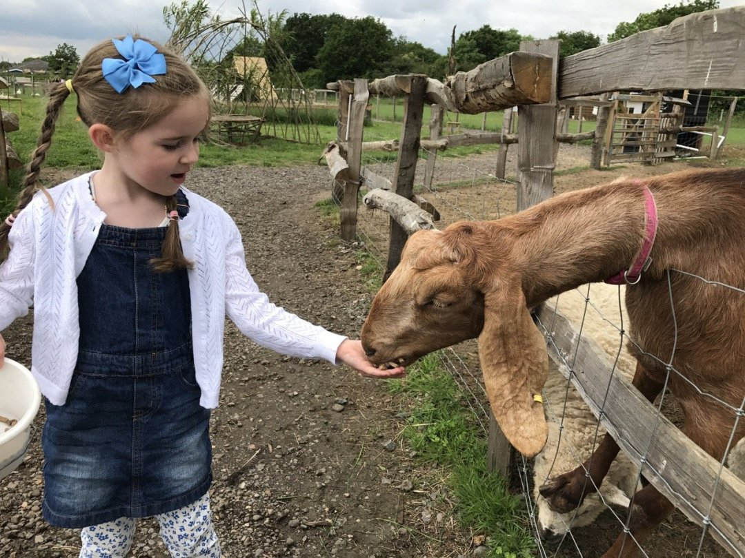 Farms in Essex - White Elm Petting Farm feeding goats