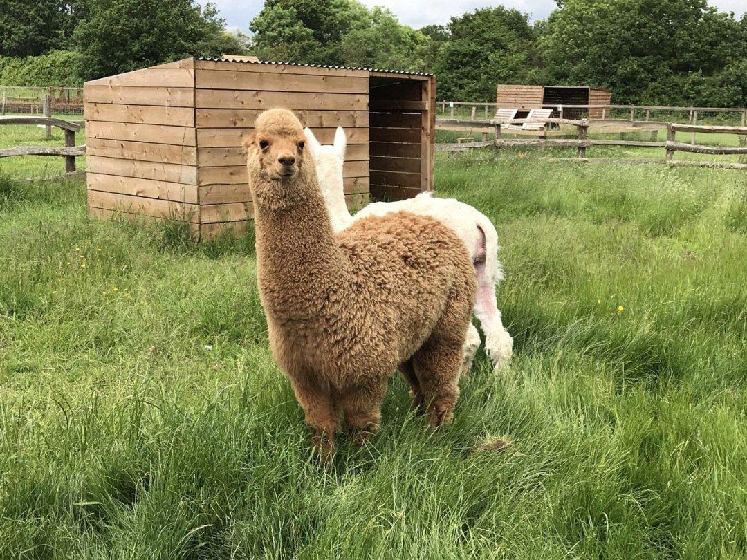 Farms in Essex - White Elm Petting Farm animals