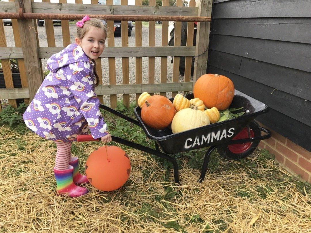 Pumpkin Picking In Essex Cammas Hall wheelbarrow