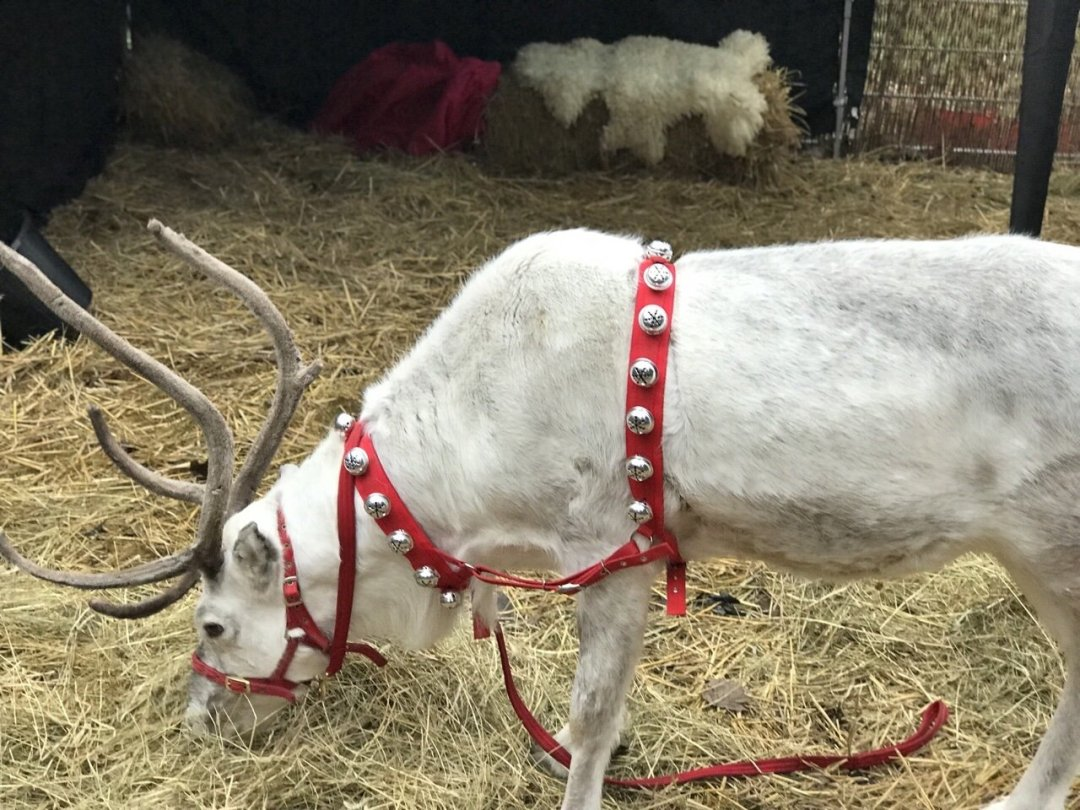 The Reindeer at An Elf's Wish at Nevendon Manor