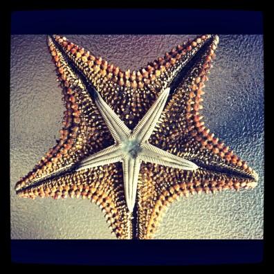 Sea Life, Ocean Living, Island Living, Puerto Rico, Travel, See Puerto Rico