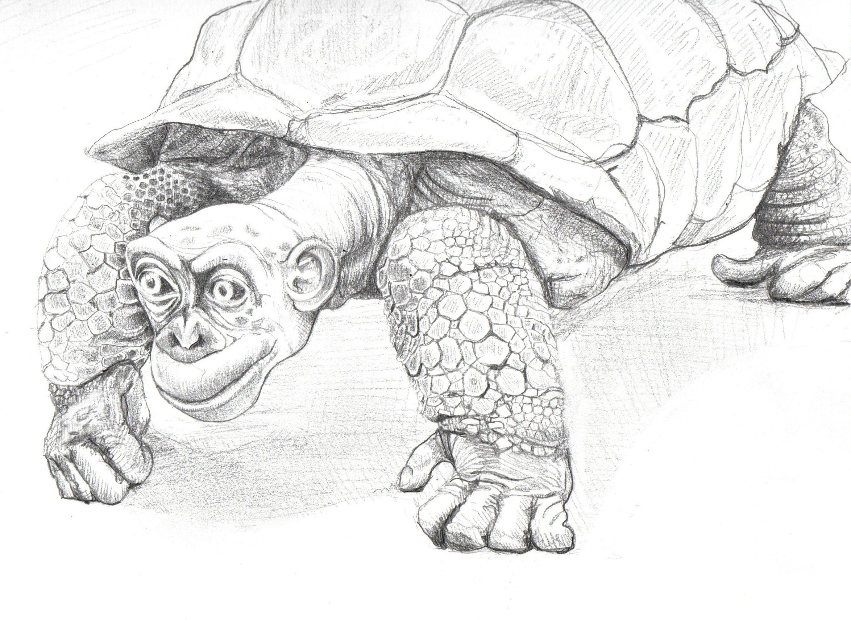 A Rare mashup Gorillortoise Tortilla Gorilla Tortoise hybrid beast pencil Nicole Little animal mashup