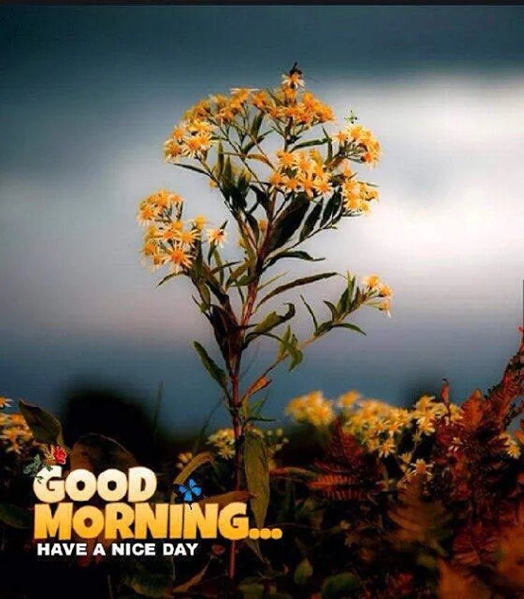 28 Amazing Good Morning Quotes and Wishes with Beautiful Images 8