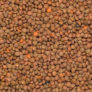 lentils brown organic