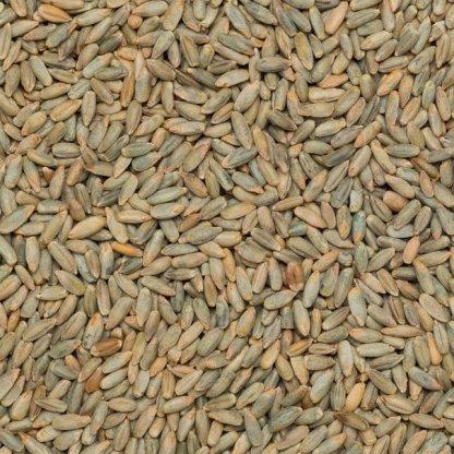 Close up of organic rye grain.