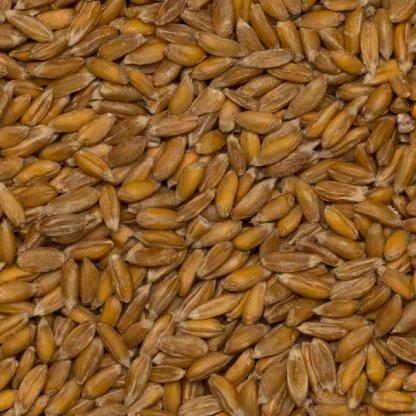 close up of Spelt Grain Organic