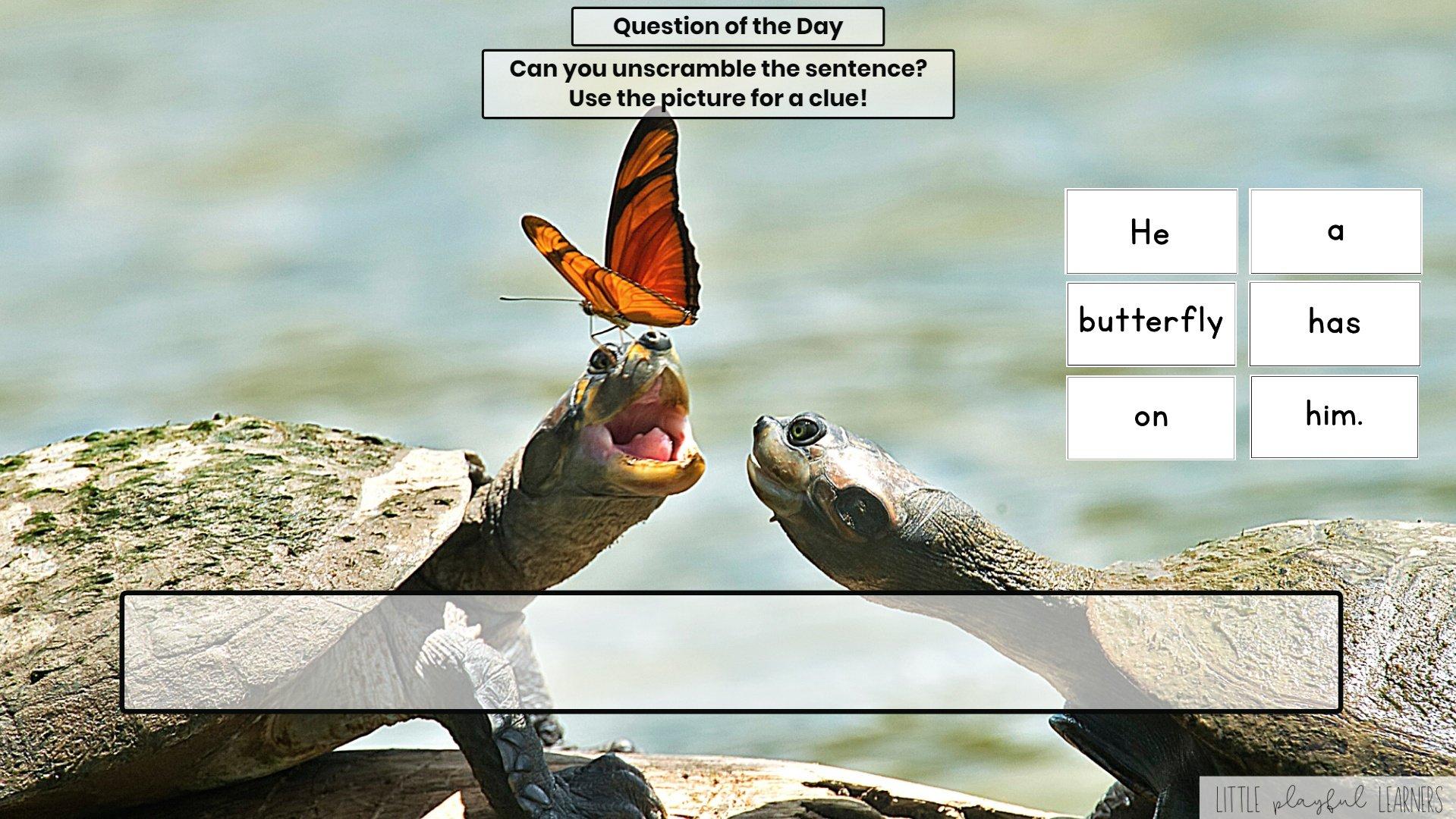 Seesaw: Sentence scramble - insect theme