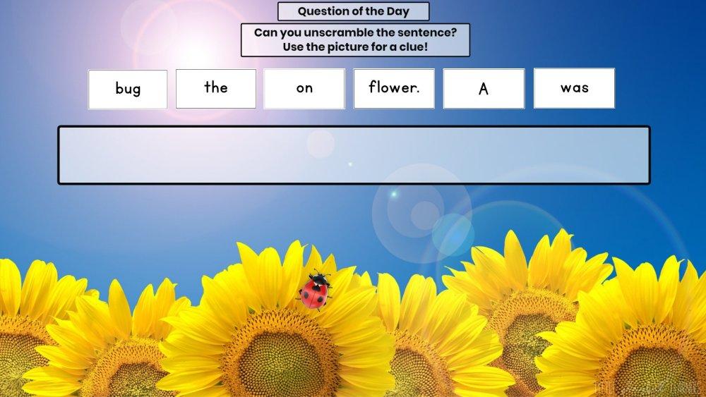Seesaw: Sentence scramble - seeds/plants/trees theme