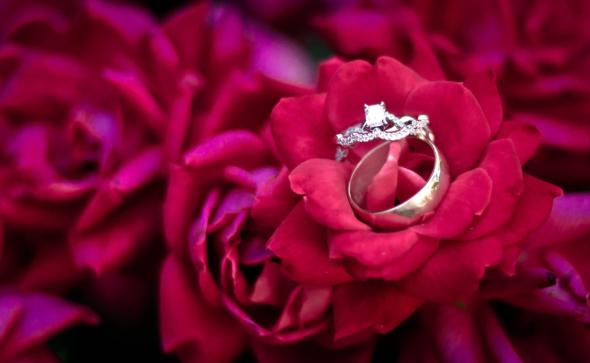 photography wedding rings