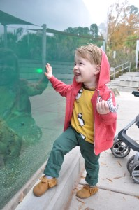 riverbanks zoo-two years old