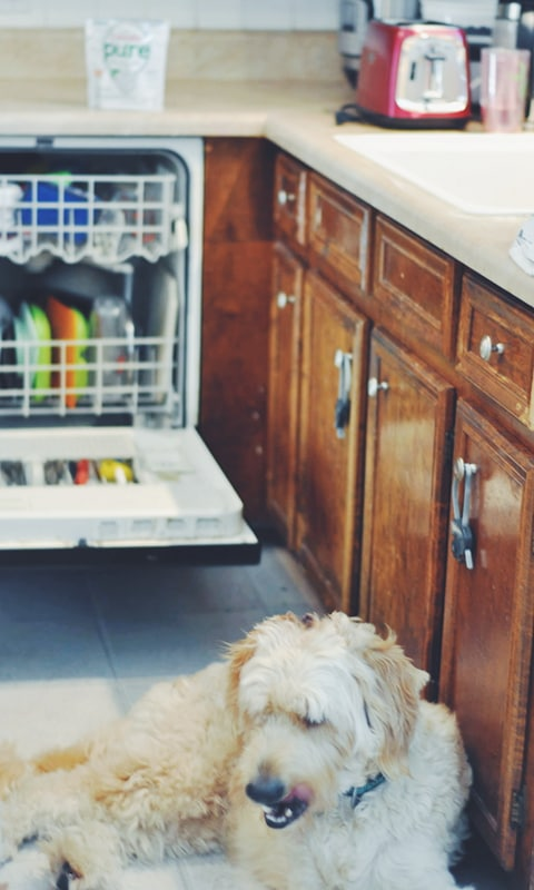 doing the dishes cascade pure essentials actionpacs goldendoodle kitchen