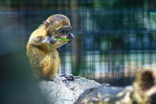 animal-ape-baby-998593.jpg