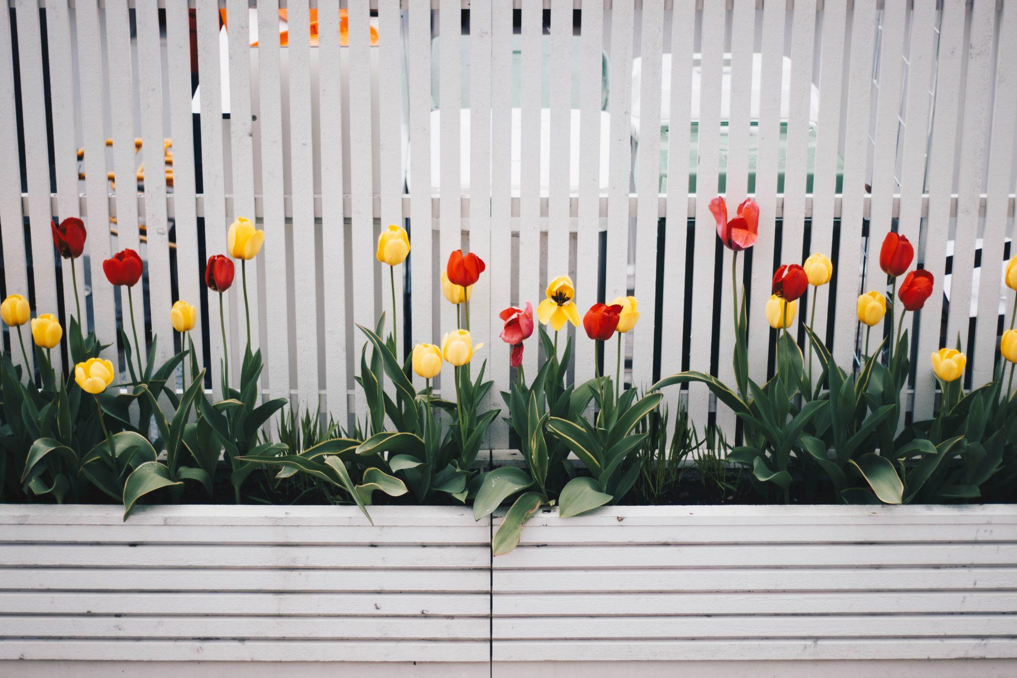 bloom-blossom-decoration-701758.jpg