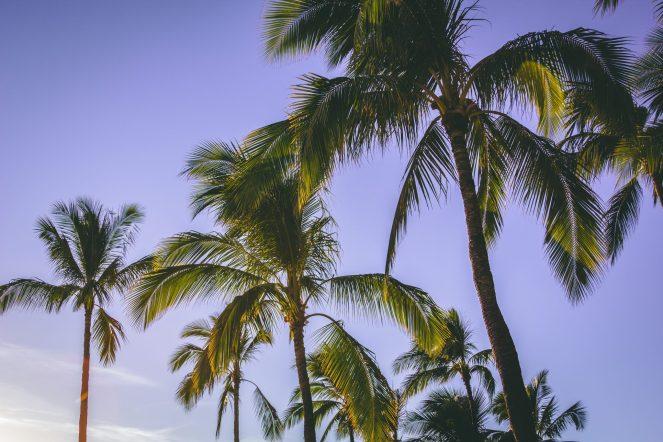 blue-skies-carribean-coconut-790226.jpg
