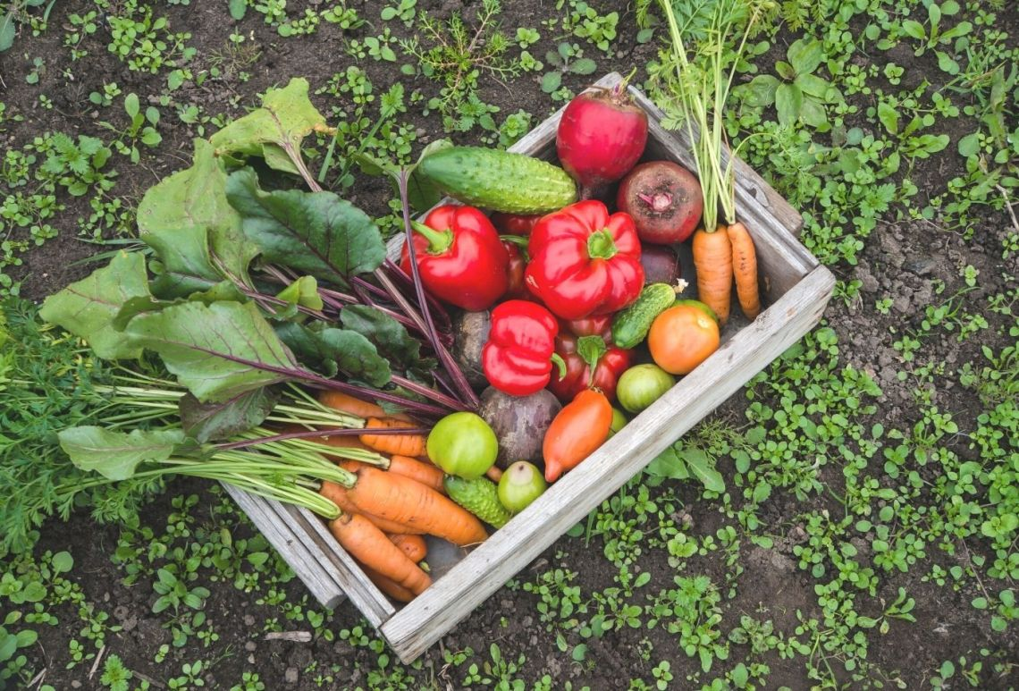 What Are The Best Vegetables To Grow In Oklahoma Little Sprouts Learning
