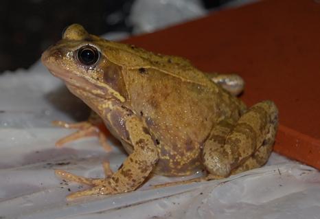 september-evening-frogs-2.jpg