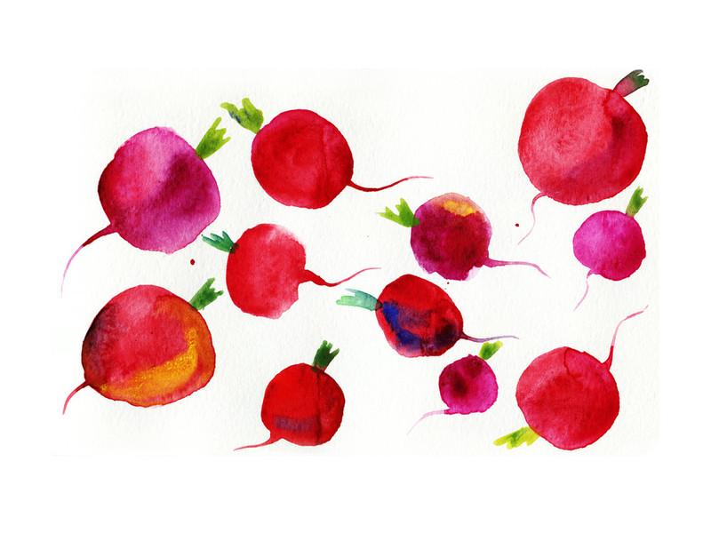 Watercolor Radish by Alexandra Dzh