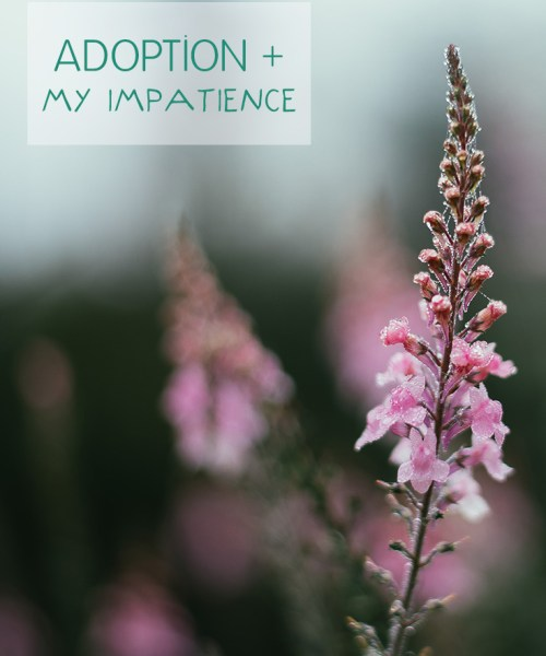 adoption and my impatience, photo by dominik martin