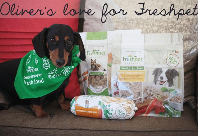 Oliver The Dachshund Loves Freshpet!