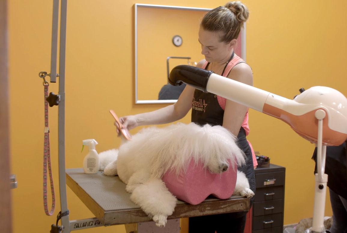 doc showcasing creative dog grooming