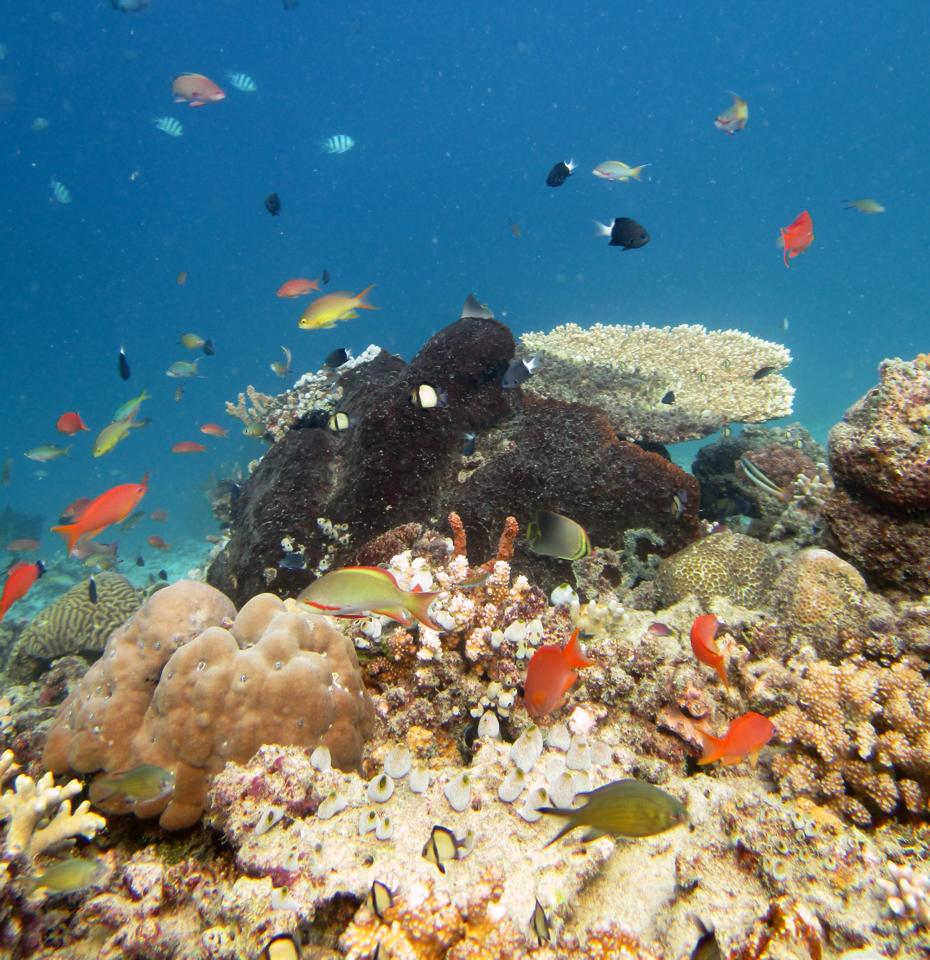 Scuba Diving in the Gili Islands means beautiful coral reefs!