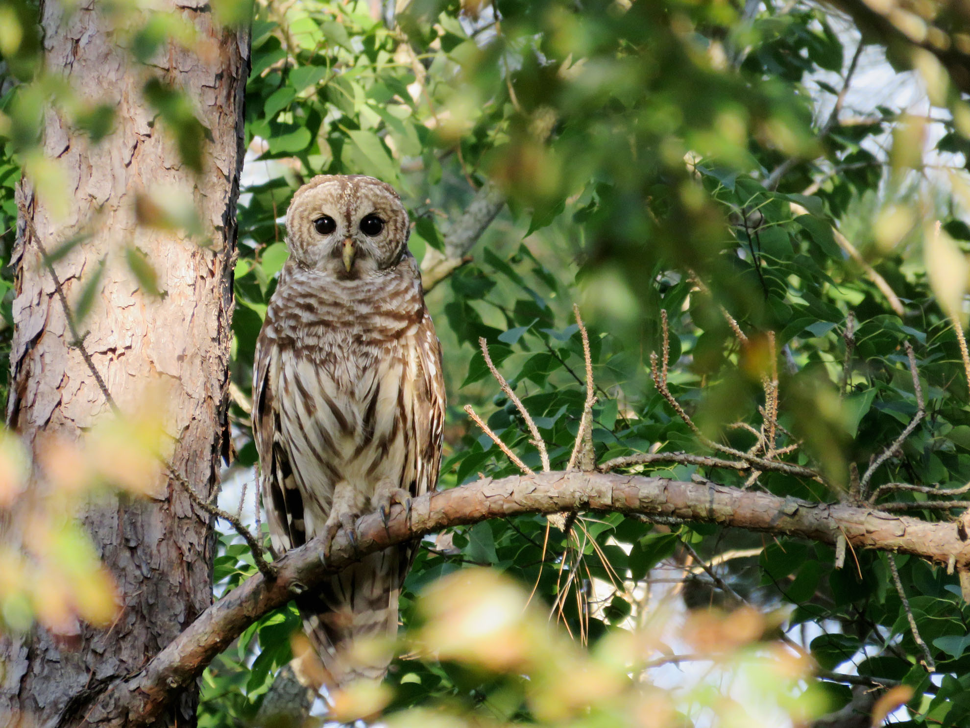 Bird Fanfares