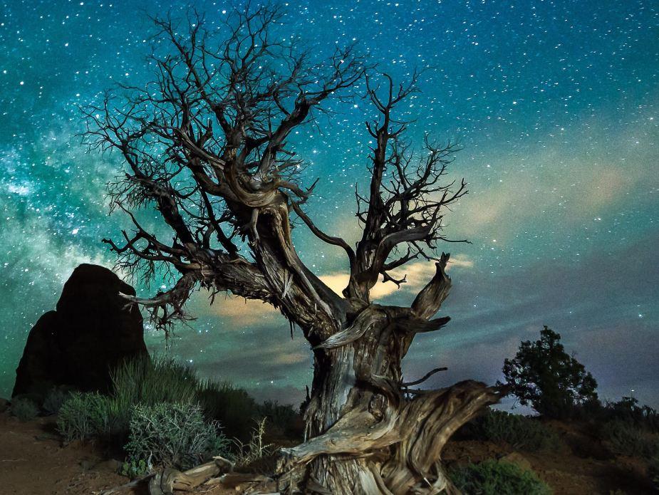 tree-photography