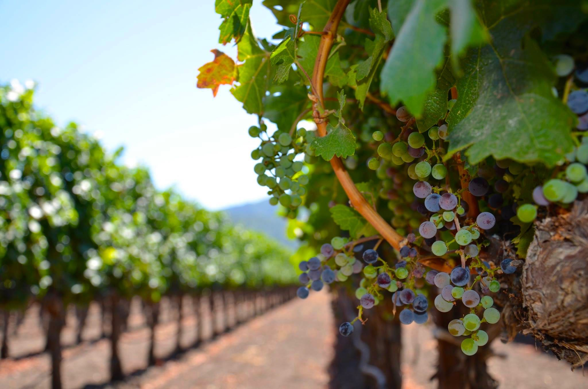 Napa Valley Wineries: 10 to Follow