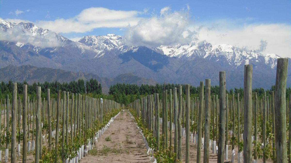 Wine Wednesday: A Q&A with Goldschmidt Vineyard's Winemaker