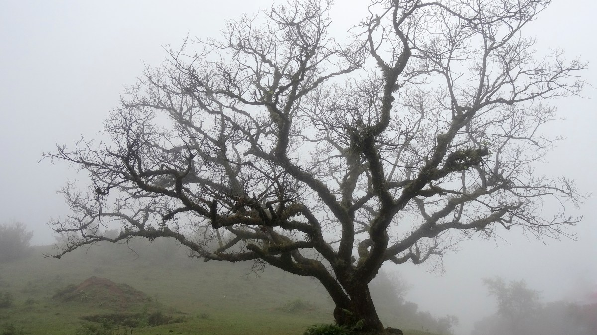 A Terrible Day And A Tree
