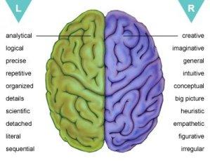 Brain-Pictures-3