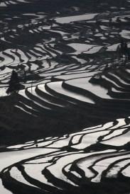 Terraces, Yunnan
