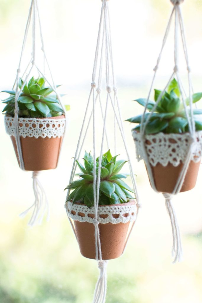 three mini succulent planters lined up in front of a bright window