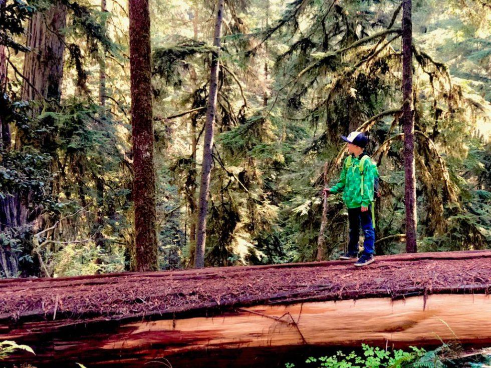 Hiking Boy Scout Tree Trail Jedediah Smith Redwoods State Park