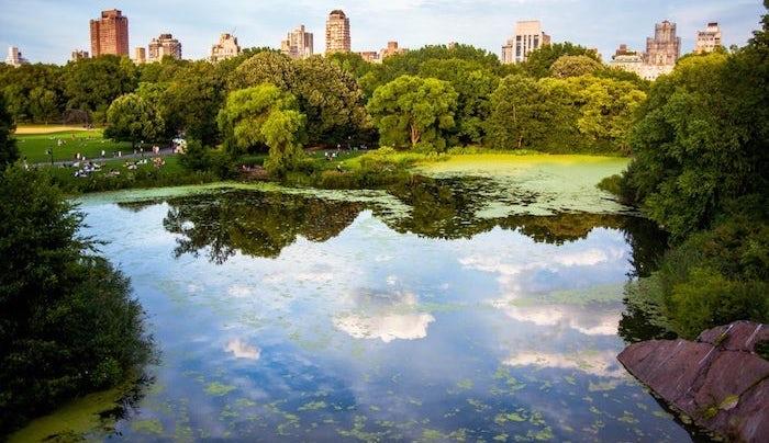 Une petite balade dans un parc ? Un incontournable des choses à faire à New York !