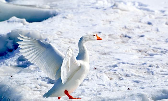 Venez admirer la faune Québécoise!