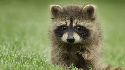 Quiz: Can You Guess The Animal By Its German Name?