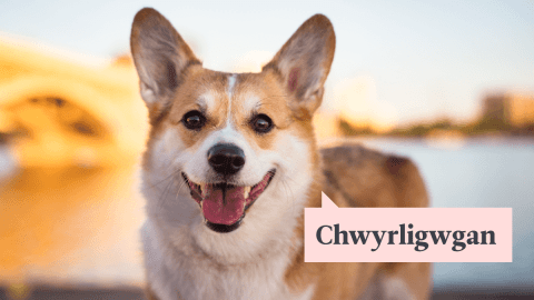 9 Delightful Welsh Words You Should Probably Know About