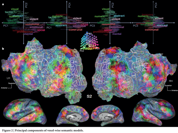 Detailed Map of Language Representation in Human Brain ...