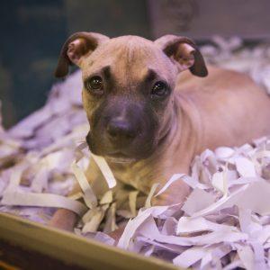 Pet shop puppy