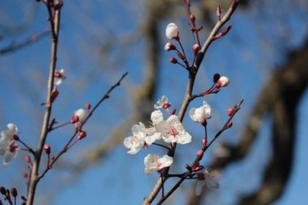 春の訪れを感じます