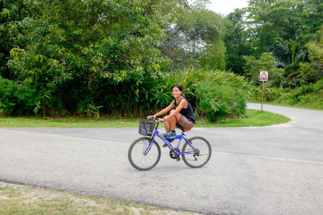 palau ubin à vélo