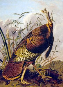 The Wild Turkey: John James Audubon