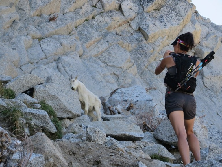 Towards the top of Aasgard we had our own little goat guide