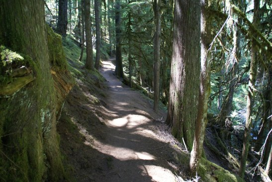 Wonderful Path   For almost 2 miles this forested path takes…   Flickr