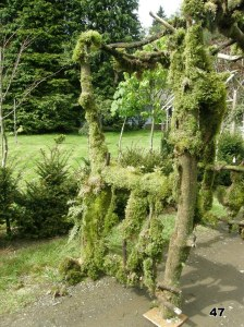 Maple with Moss Pergola