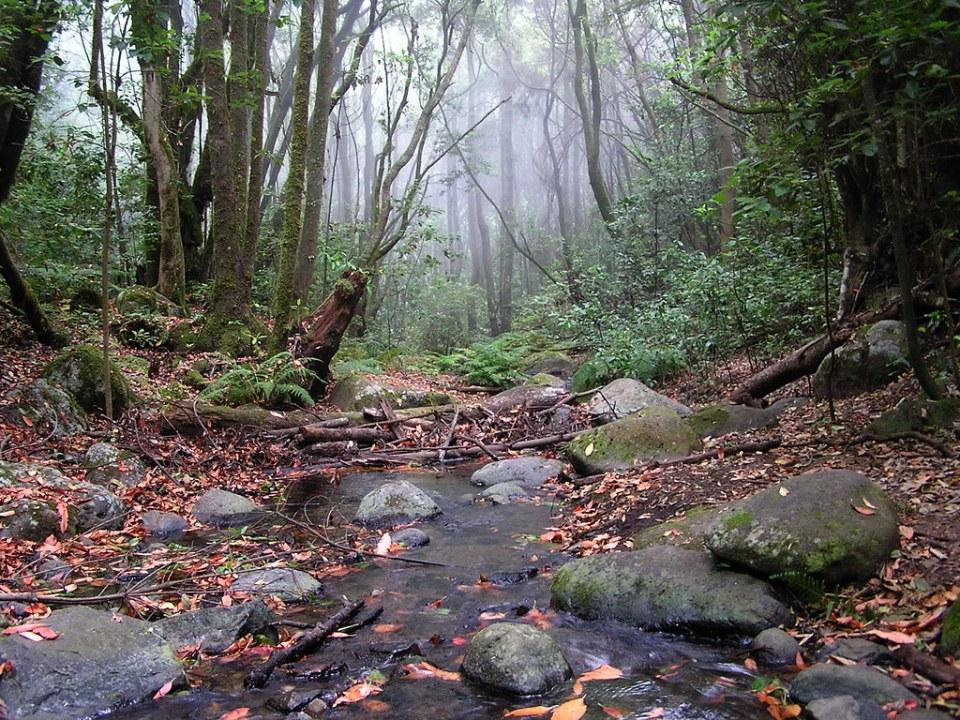 Bosque y Arroyo El Cedro Parque Nacional de Garajonay Isla de La Gomera Islas Canarias 0502