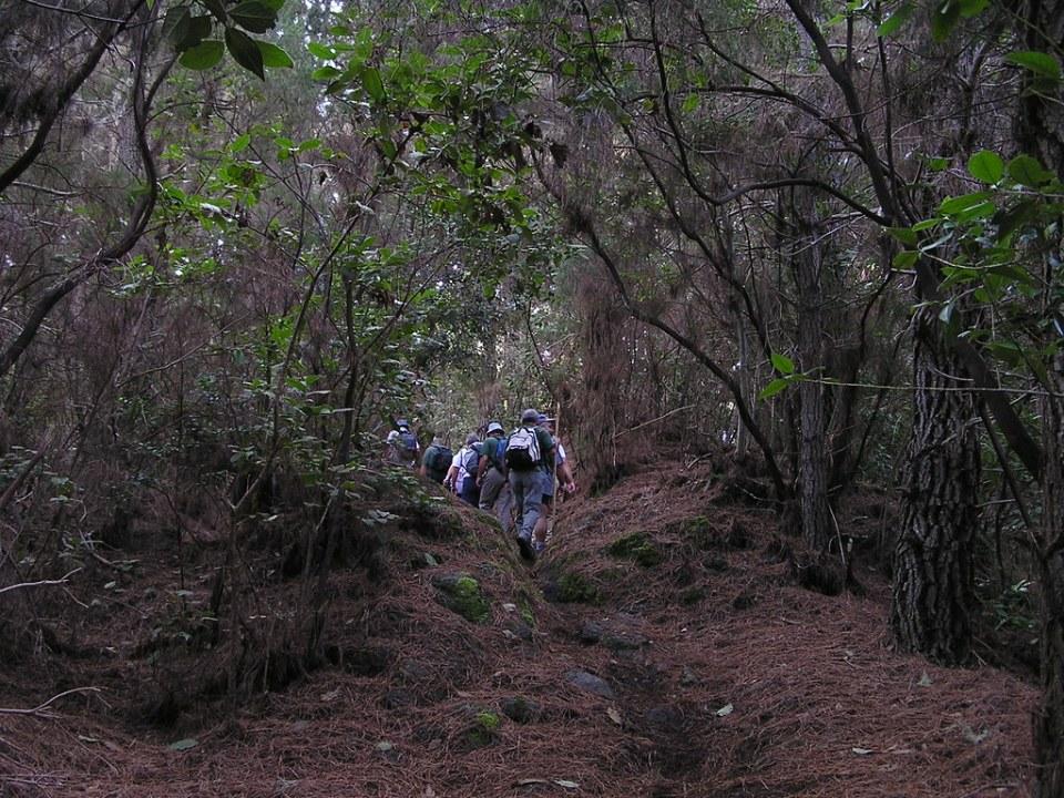 Reserva Natural Especial de Las Palomas isla de Tenerife 24