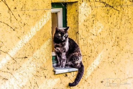 Katze am Fensterbrett